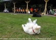 Web_P1080847_TSV_Deute_Lauftreff-Sommergrillen_14.7.16_Hundespass