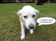 Web_P1080848_TSV_Deute_Lauftreff-Sommergrillen_14.7.16_Hundefrage